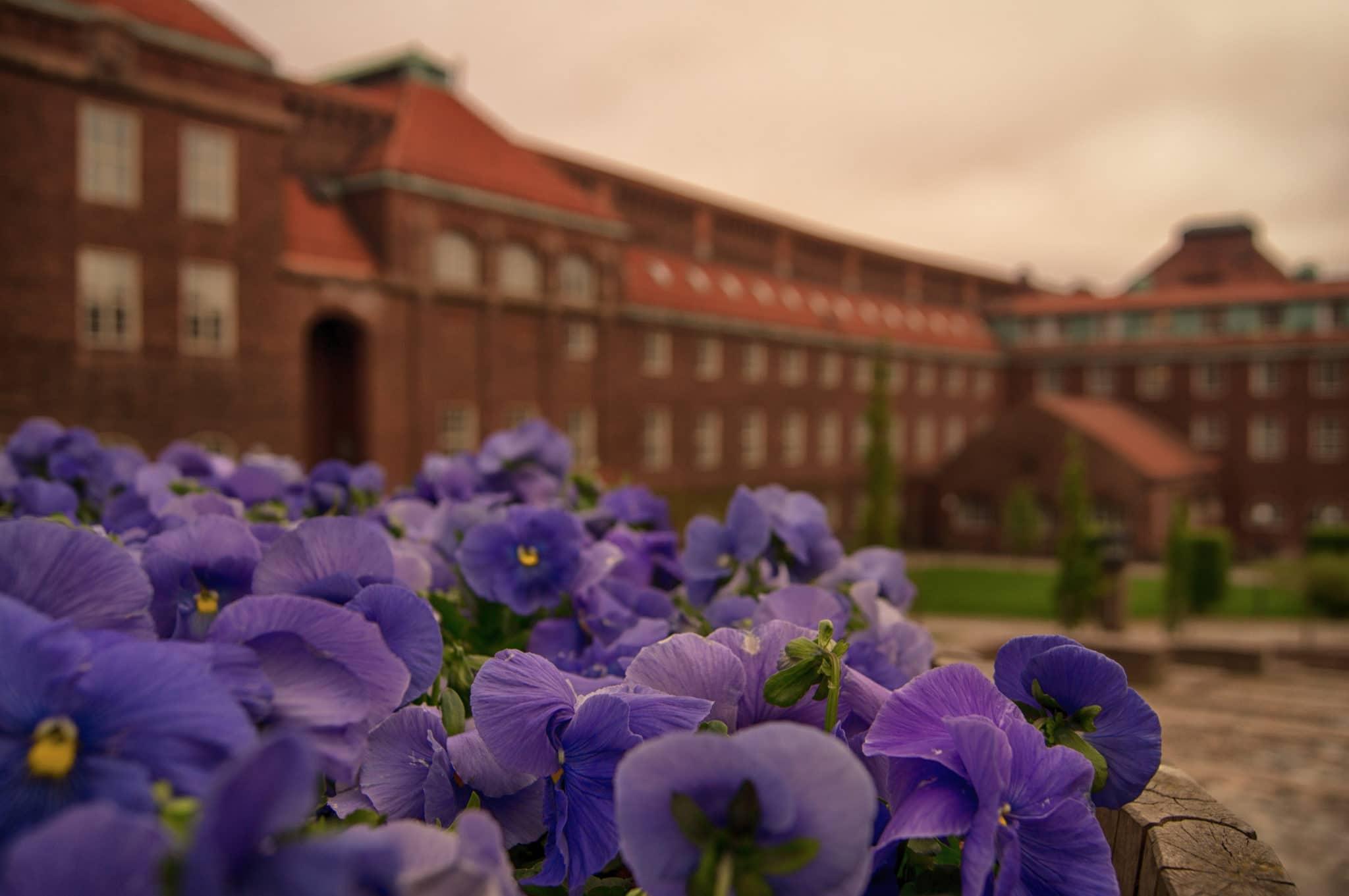 社会人留学:海外大学の写真