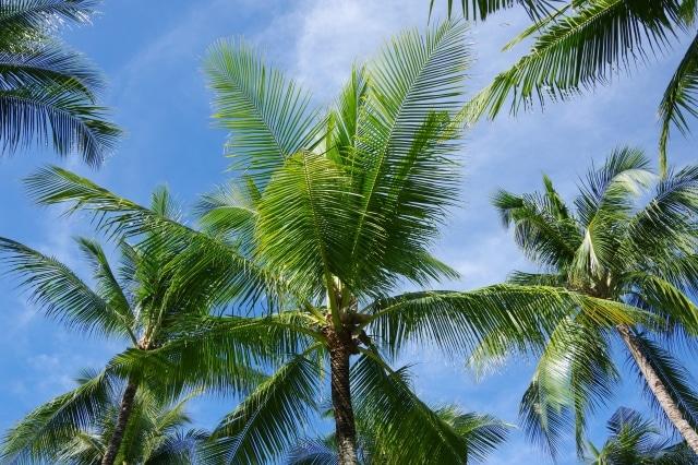フィリピンのセブ島ってどんなところ?